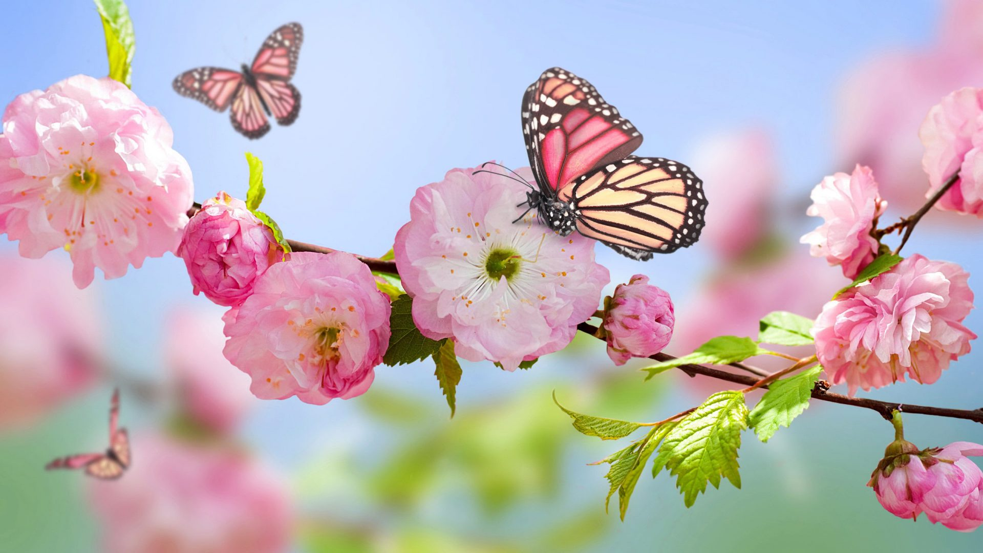 Stunning-Spring-1920x1080